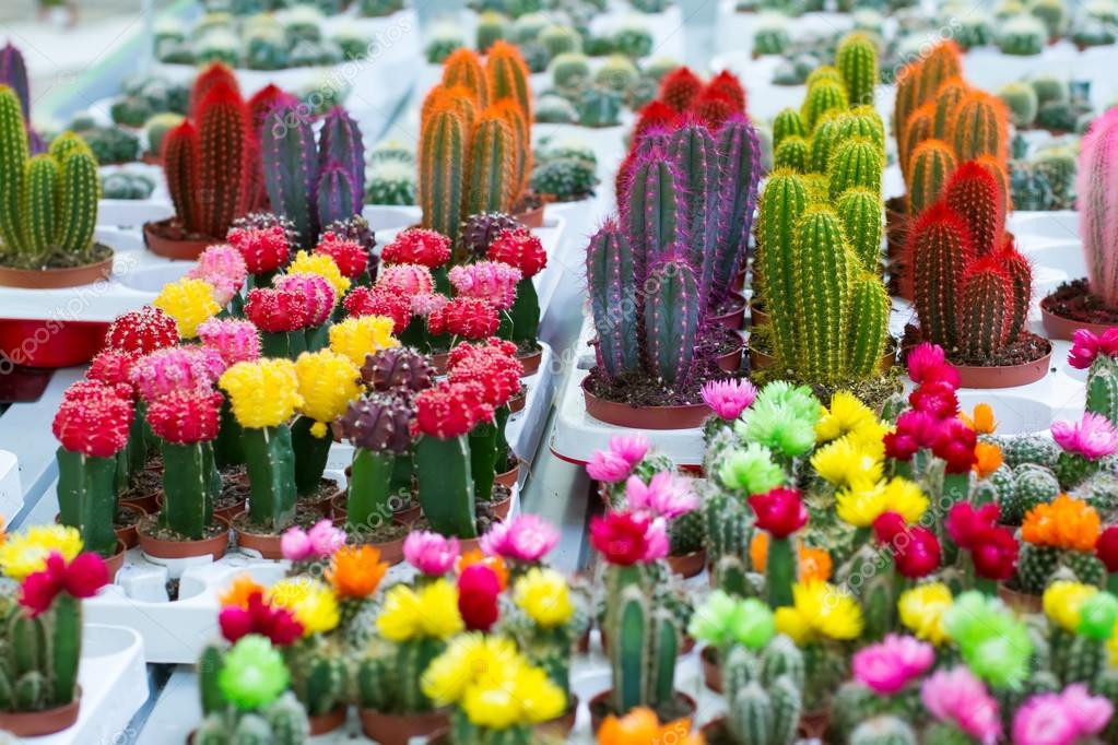 Как сделать цветные кактусы 853