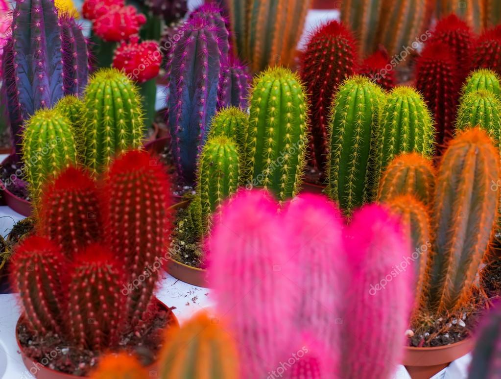 Как сделать цветные кактусы 402