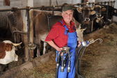 Farmer is working on farm with cows — Foto Stock