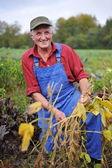 Farmer checking soybean field — Stock Photo