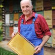 Farmer with frame of honeycomb — Stock Photo #57240653
