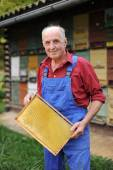 Farmer with  frame of honeycomb — Stock Photo