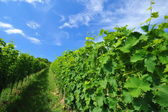 Picture of winery garden — Stockfoto