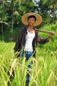 Traditional rice farmer — Stock Photo
