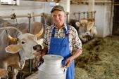 Farmer with dairy cows — Stock Photo