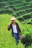 Traditional organic rice farmer — Stock Photo