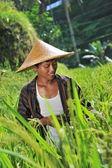 Organic farmer working — Stock Photo