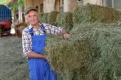 Organic farmer stack bales — Stock Photo