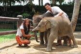 Couple with baby elephants — Stock Photo