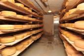 Cow milk cheese — Stock Photo