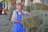 Organic farmer stack bales for feeding livestock. — Stock Photo