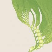 Seaweed (kelp) — Stock Vector