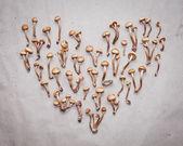 Honey fungus mushrooms, heart shape — Stock Photo