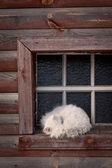 Sleeping cat at the window — Stock Photo