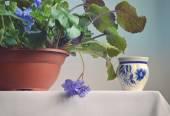 Violette Blüte in einem Topf. — Stockfoto