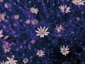 White wildflowers — Stock Photo