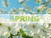 Spring blur background — Stock Photo