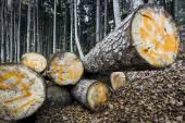 Sawn logs — Stock Photo
