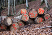 Sawn logs in a forest — Stock Photo