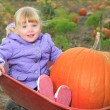 Happy little child, laughing cute toddler girl in casual outfit and red rubber boots, enjoying nature playing outdoors helping to harvest bio pumpkins growing in organic field on sunny autumn day — Stock Photo #65014195