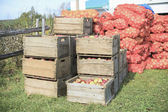 A photo of freshly picked red apples in a wooden crate. — Stock Photo