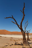 Death tree Hidden Vlei — Stock Photo