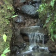 Small Waterfall in a Tropical Rain Forest — Stock Video #58338137