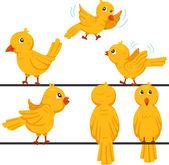 Illustrator of birds funny cartoon — Vecteur