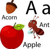 Illustrator of A alphabet — Stock Vector