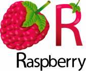 Illustrator r font with raspberry — Stock vektor