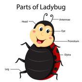 瓢虫的插画部分 — 图库矢量图片