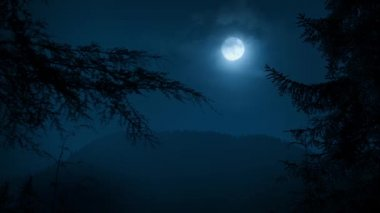 Trees Framing Night Forest With Moon — Vídeo Stock