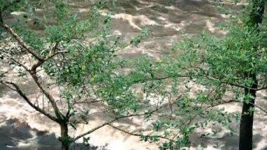Flooding River Through Trees — Stock Video