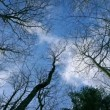 Looking Up At The Sky Through Tree Branches — Stock Video #71242827