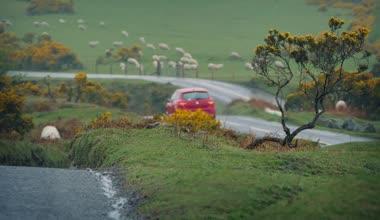 Carros passando em terras perto de rebanho de ovelhas — Vídeo stock