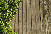 Ivy on wood — Stock Photo