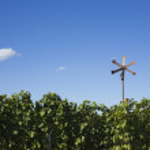 Vineyard and klopotec — Stock Photo #58875719