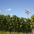 Vineyard background — Stock Photo #58875731