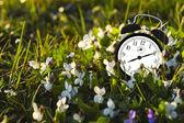 Alarm clock and flowers — Stock Photo