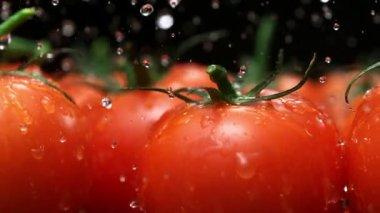Water splash on tomato — Stock Video