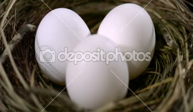 Three eggs in a nest — Stock Video