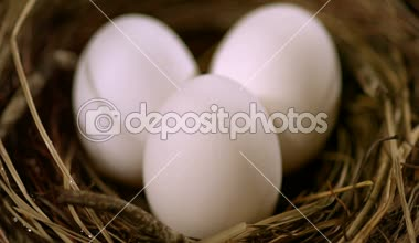 Three eggs in a nest — Vídeo de Stock