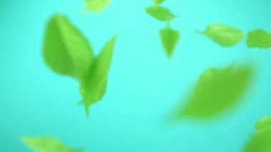 Green leaves flying in the air — Stock Video