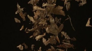 Dried leaves falling — Stock Video