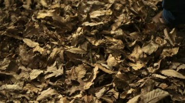 Kicking piles of dried leaves — Stock Video