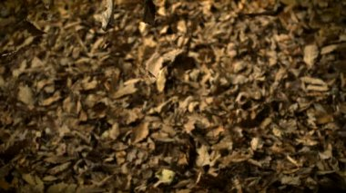 Dropping pile of dried leaves — Stockvideo