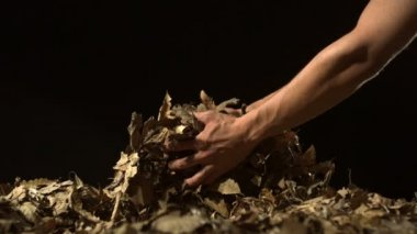 Grabbing piles of dried leaves — Stock Video
