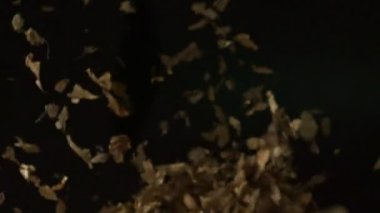 Blowing pile of dried leaves — Stock Video