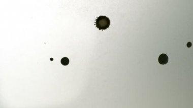Black ink drops — Stock Video