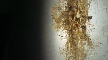 Smashing beer bottle against wall — Stock Video